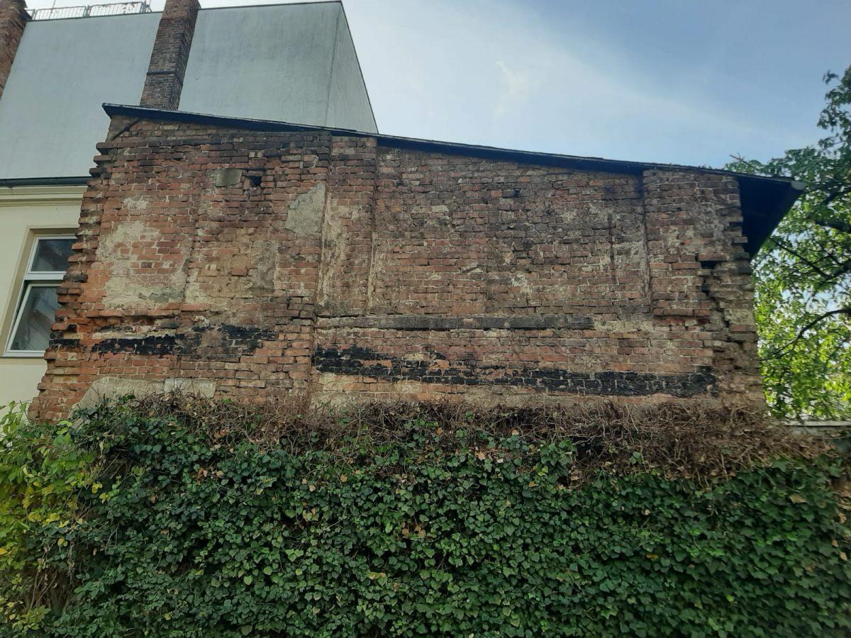 Rückschnitt Fassadengrün in Cottbus (nachher)