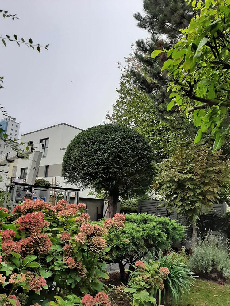 Baumzuschnitt und Gartengestaltung
