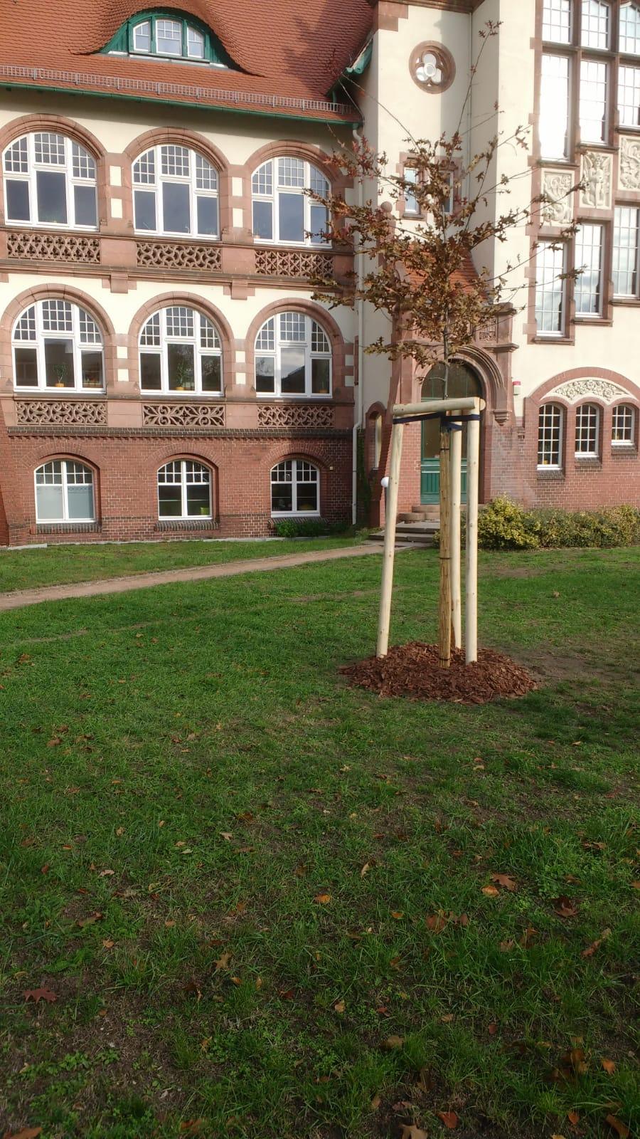 Baumpflanzung in Cottbus
