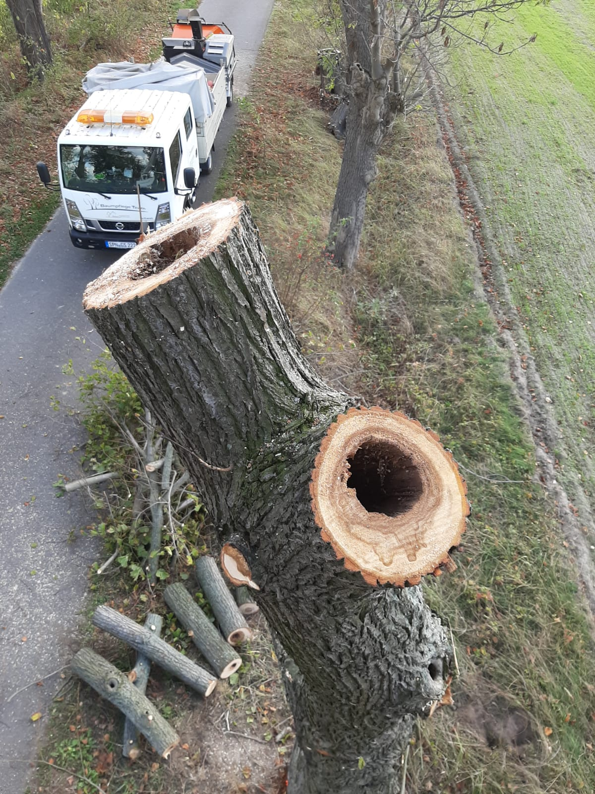 Gefahrbaumfällung
